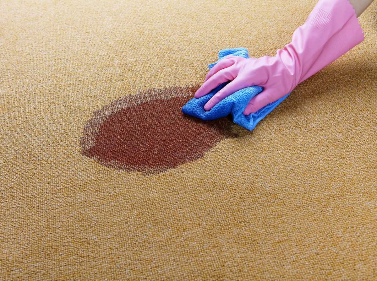 A person blotting a dark wet stain on carpet
