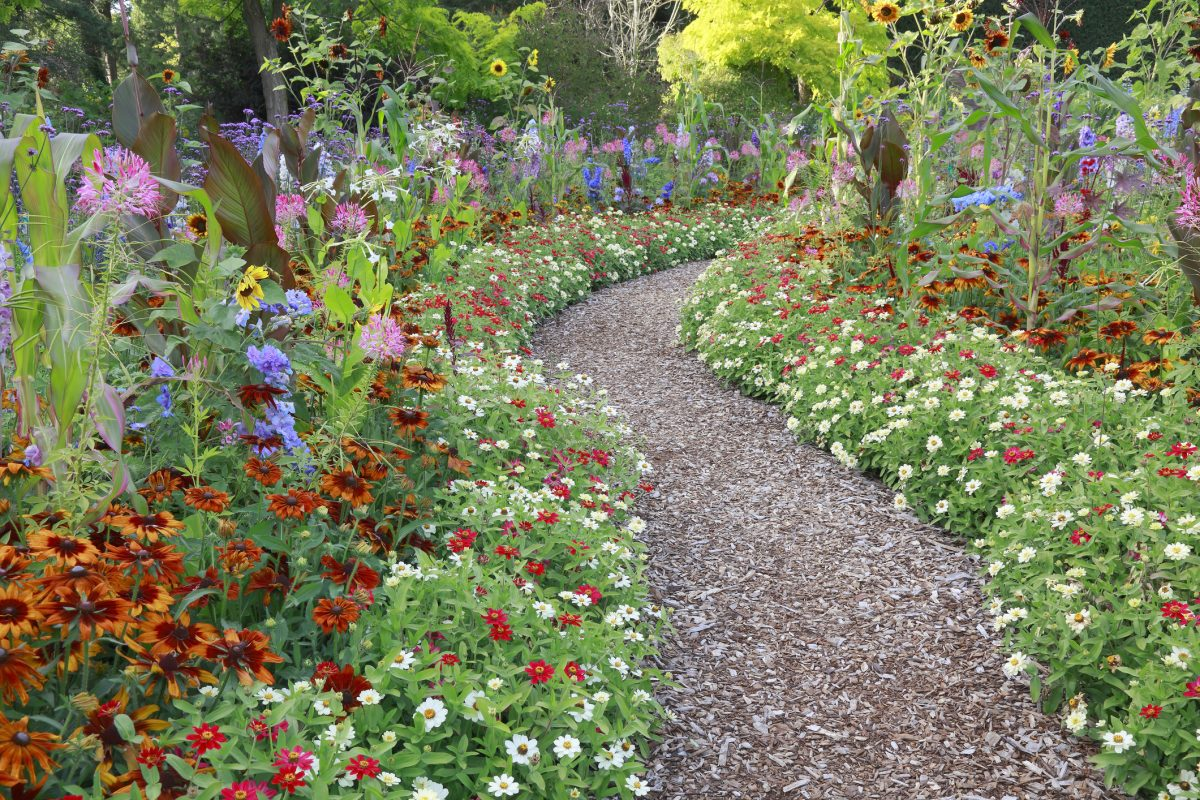 Landscape ideas flower-lined path