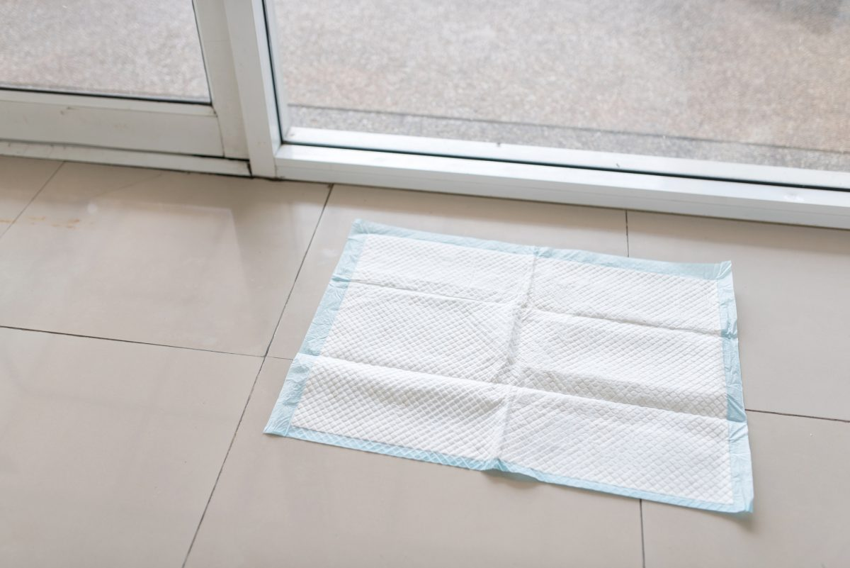 A potty training pad on a tile floor